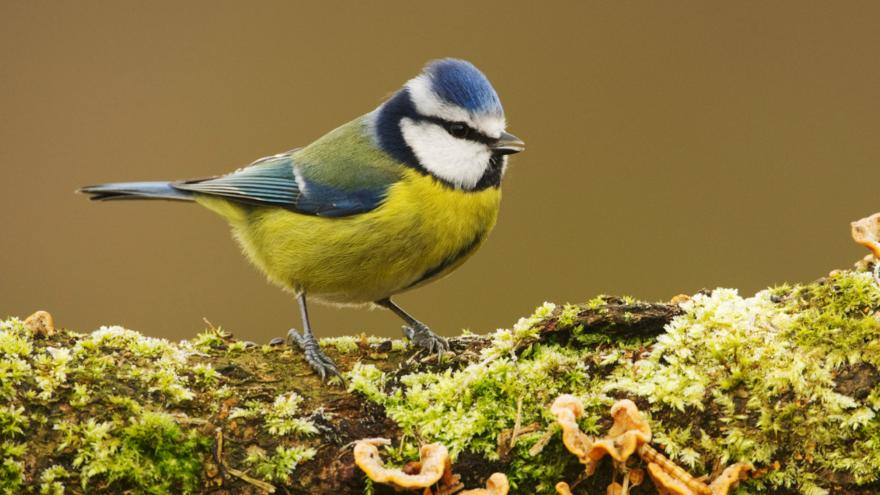 10 birds that you can spot this winter cbbc bbc