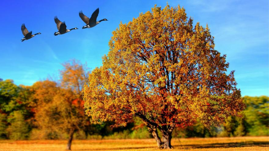 can you spot these 5 signs of autumn cbbc bbc