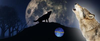 Image of a wolf howling with the moon in the background and the wolfblood logo