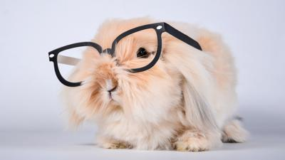 Junior Vets On Call - Quiz: Are you a bunny boffin?