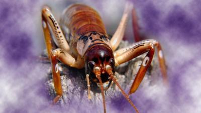 Naomi's Nightmares of Nature - Quiz: Creepy crawlies