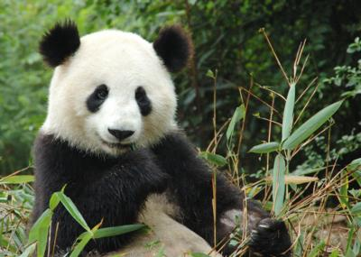 All Over the Place Asia - Quiz: Which Asian national animal are you?