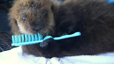 Naomi's Nightmares of Nature - Cute overload - otter hair care