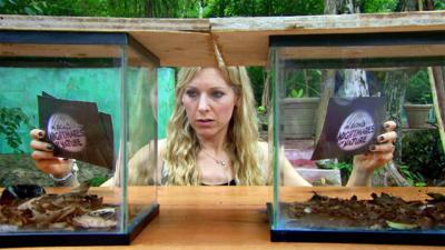 Naomi's Nightmares of Nature - Naomi's Coral Snake Nightmare