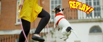 A dog skipping.