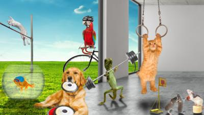 CBBC HQ - Which Olympics event could your pet win?