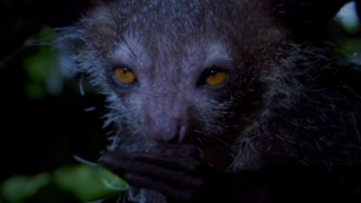 Deadly 60 - Searching for the mysterious aye-aye