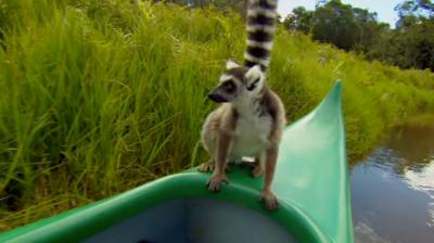 Deadly 60 - Close lemur encounter