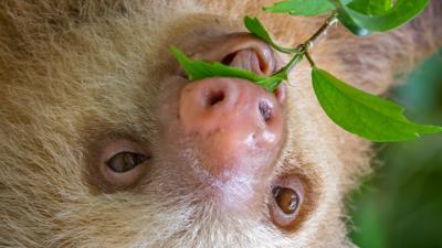 CBBC HQ - 5 times you were a sloth
