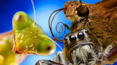 Naomi's Nightmares of Nature - Ten incredible insects & spiders