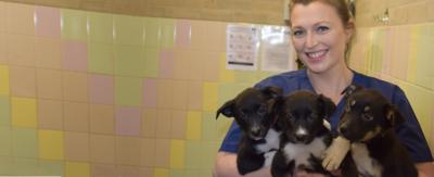 A blonde woman wearing blue scrubs is smiling while holding up three small black and white puppies.