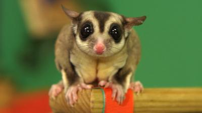 Andy's Secret Hideout - Australian Animals