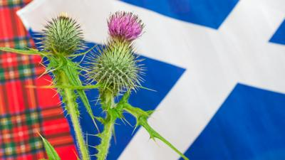Let's Celebrate - St Andrew's Day Quiz