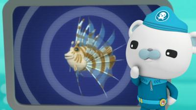Octonauts - Octonauts Creature Reports