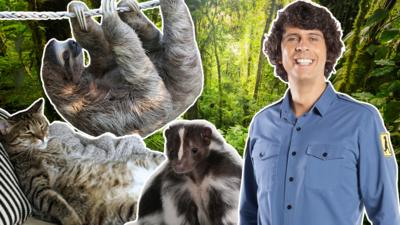Andy's Secret Hideout - Andy's Animal Quiz