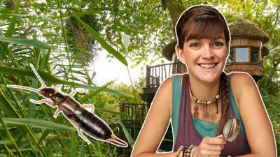 Minibeast Adventure with Jess - Earwig Adventure