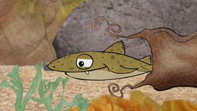 Old Jack's Boat: Rockpool Tales - The Leathery Purse