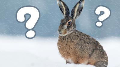Down on the Farm - Which winter animal are you?