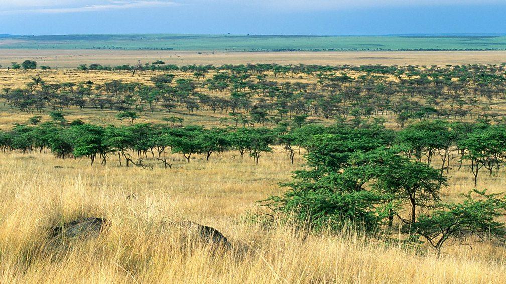 картинки лесов субэкваториального пояса добиться этого, нужно