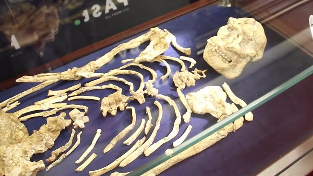 Ancient South African skeleton unveiled