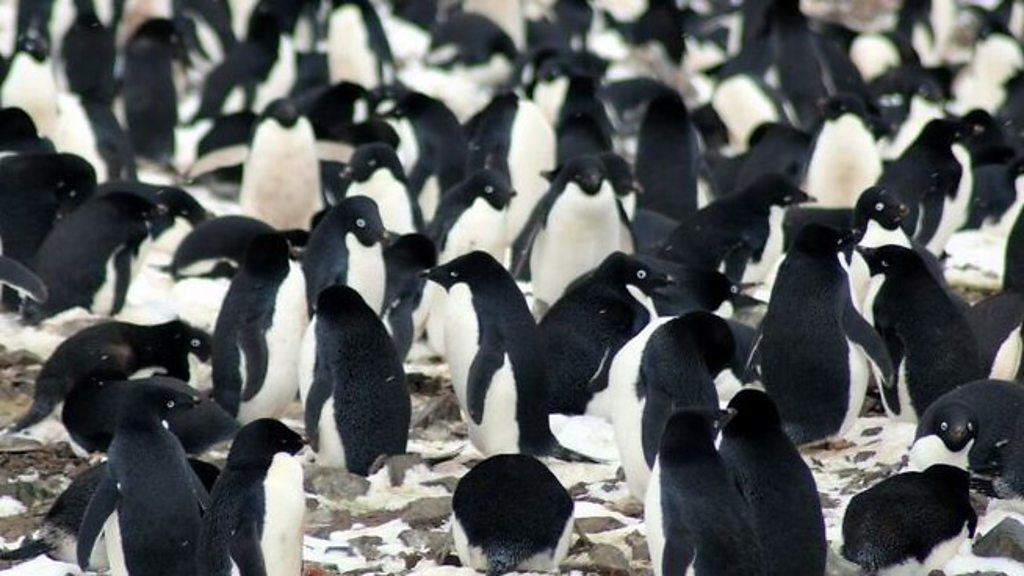 Penguin super-colony spotted from space