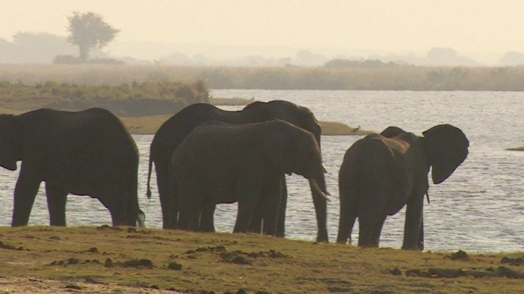 Botswana holds elephant hunting auctions