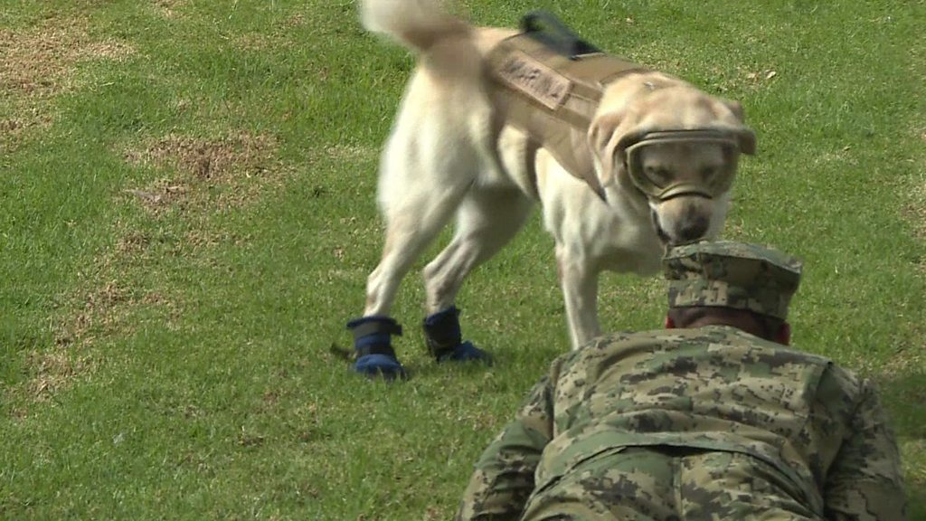 Famed Mexican Rescue Dog Retires From Duty