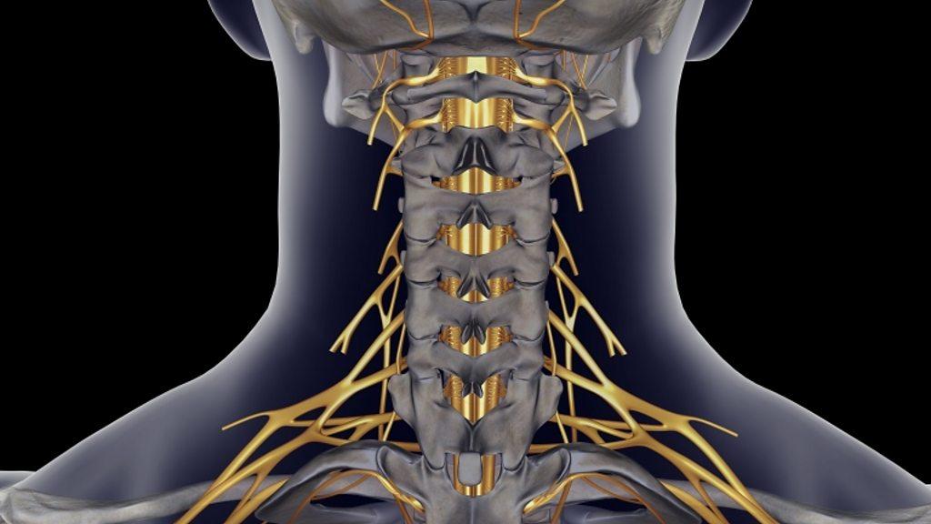 'Rewiring nerves' reverses hand and arm paralysis - BBC News