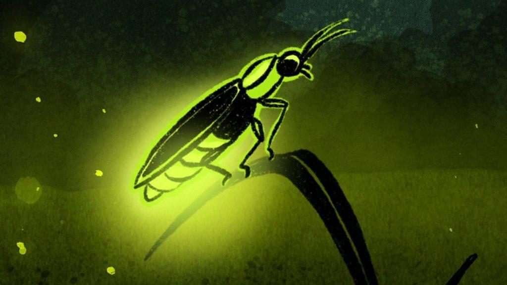 Cómo las luciérnagas inspiraron bombillas de luz más potentes - BBC News  Mundo