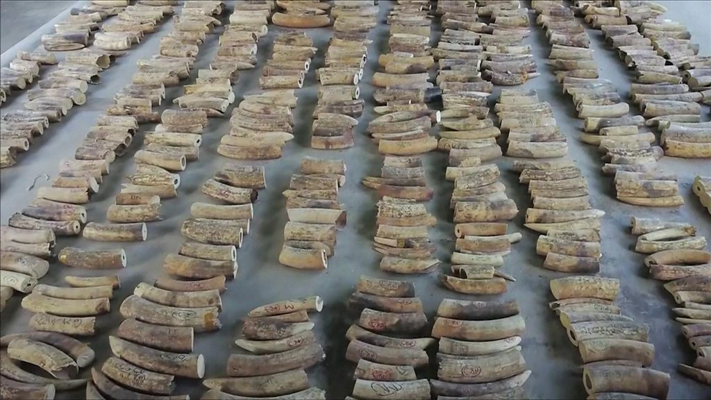 Singapore seizes elephant ivory and pangolin scales in record $48m haul