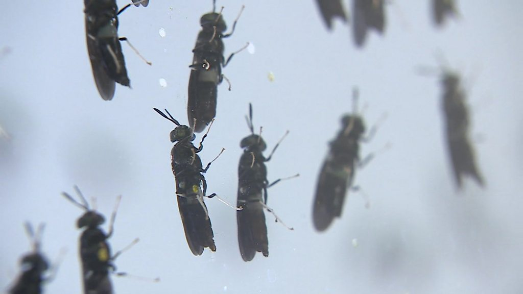 Could insects be the perfect pet-food ingredient?