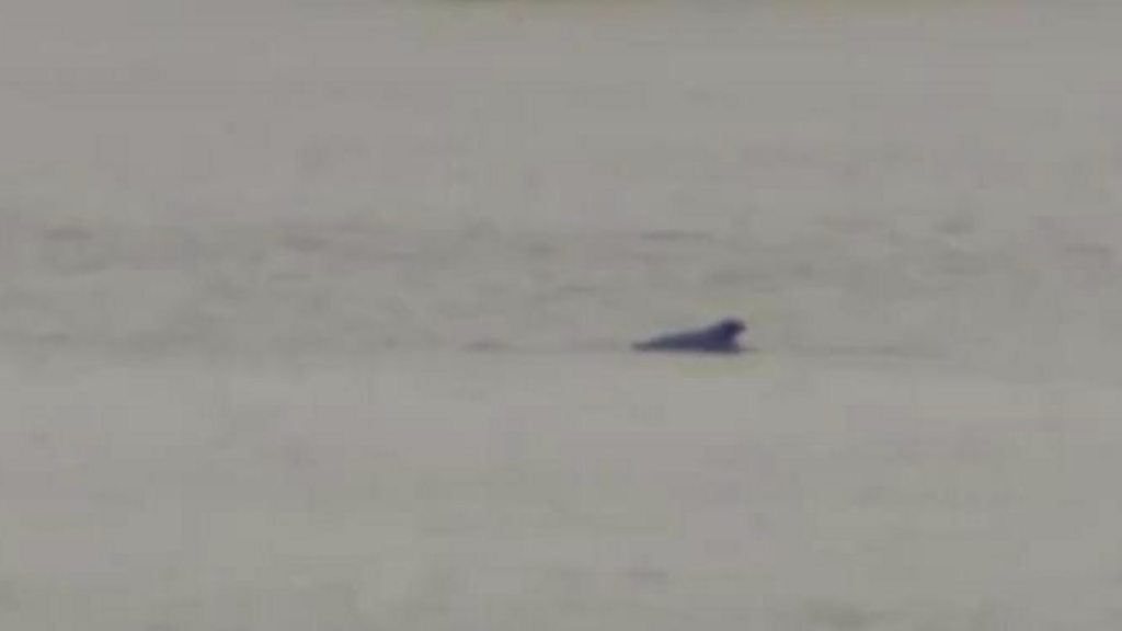 Humpback whale spotted in river Thames found dead