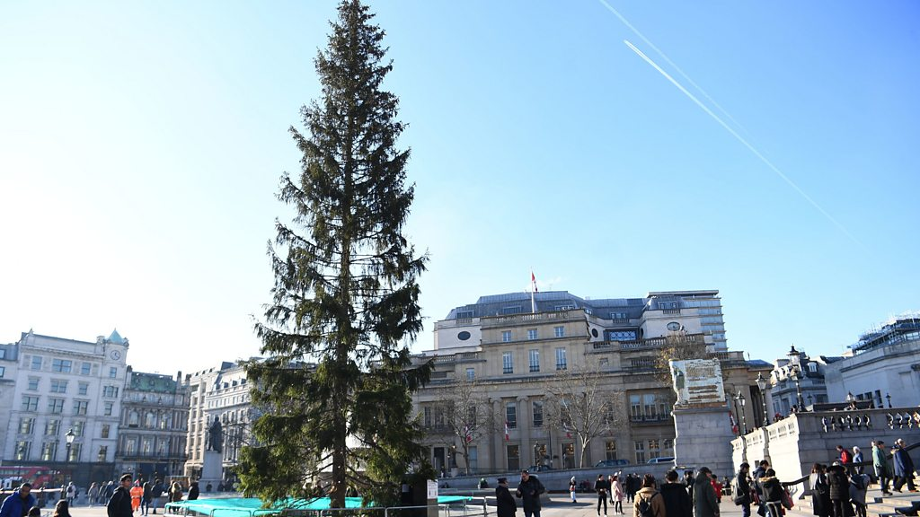 Trafalgar Square Christmas tree:  Sparse  spruce ridiculed