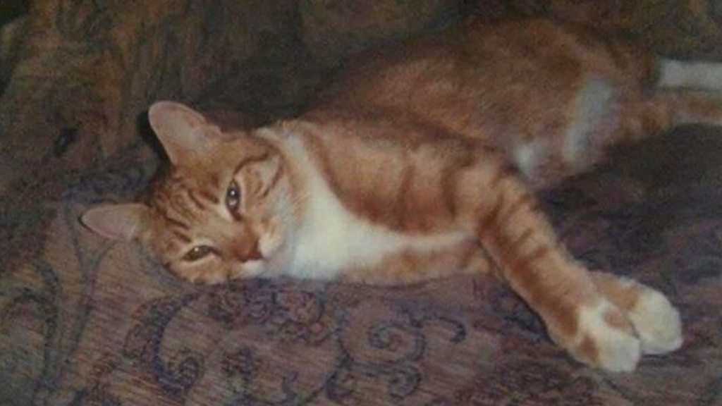 Cat found, according to the County of Ceredigion, Cardiff distance van travel