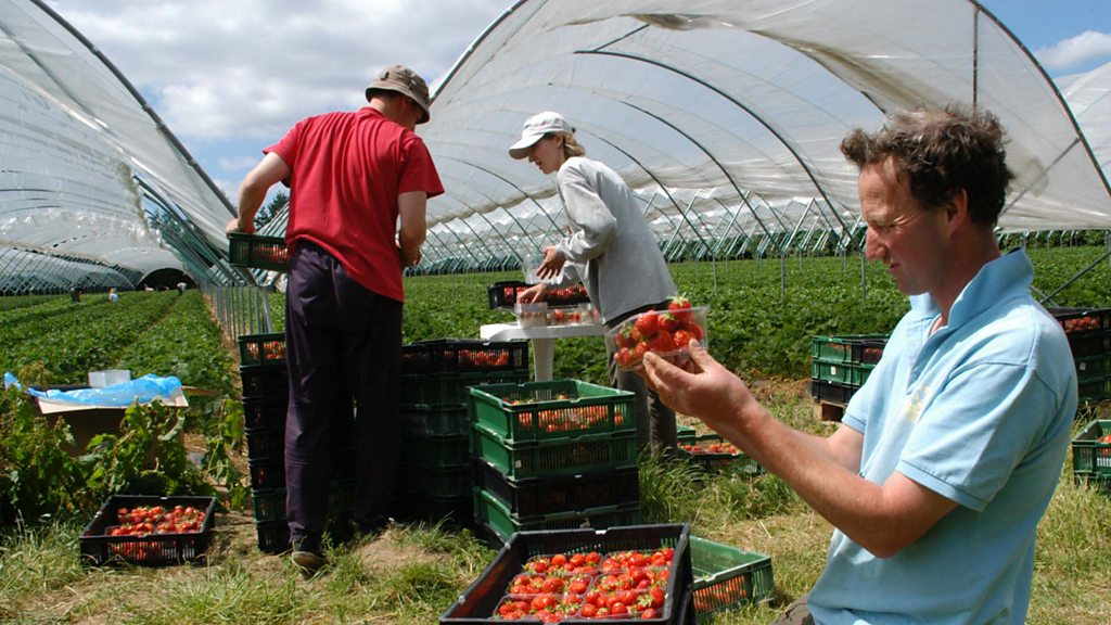 Pick-your-own farms are hoping for another bumper summer.