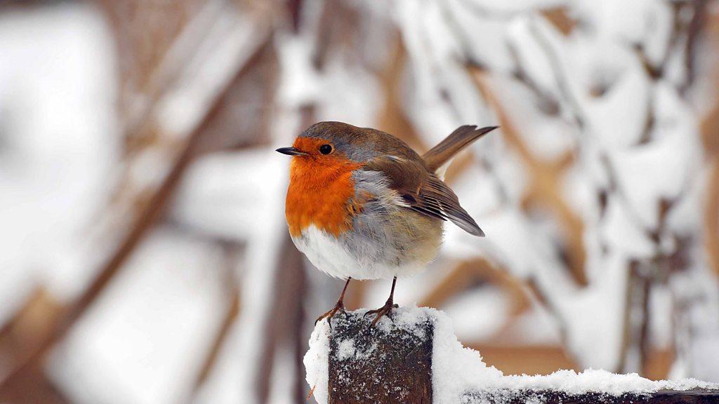 Winterwatch - Live Lesson