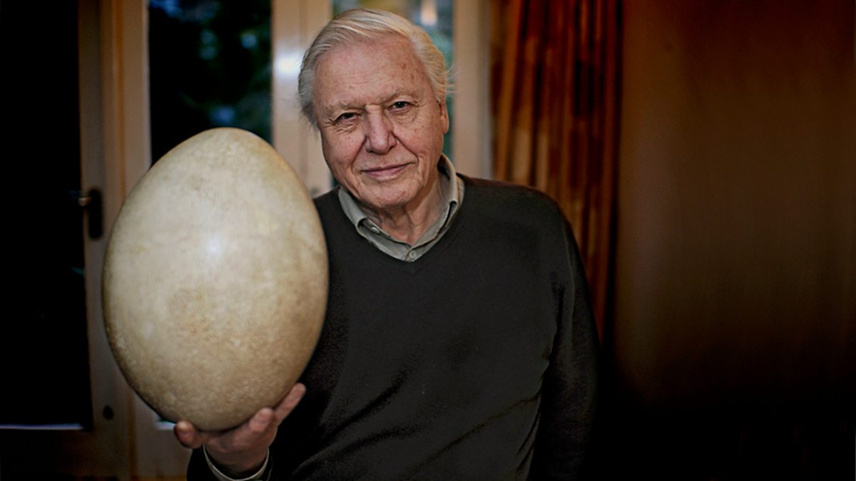 Bbc Two Attenborough And The Giant Egg
