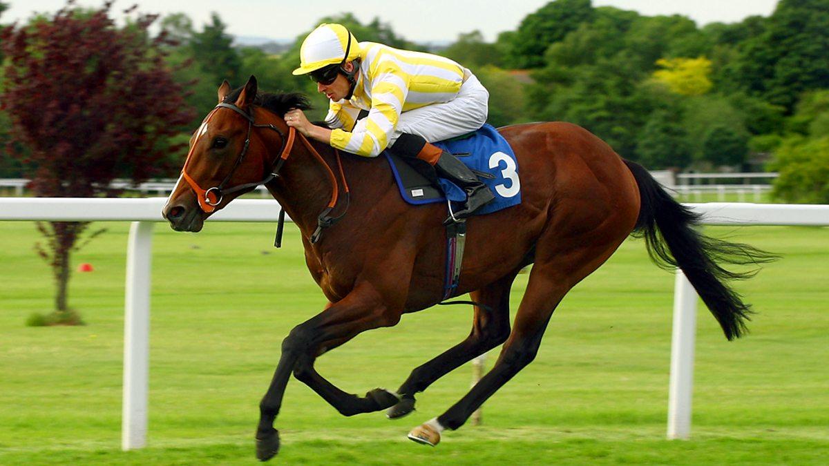 live racing horse