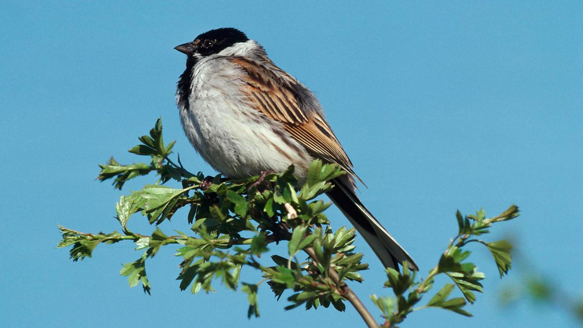 Bbc Radio 4 Tweet Of The Day Reed Bunting
