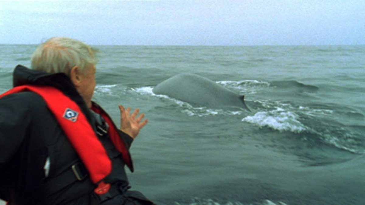 BBC One - The Life of Mammals, Return to the Water, Inside the blue whale