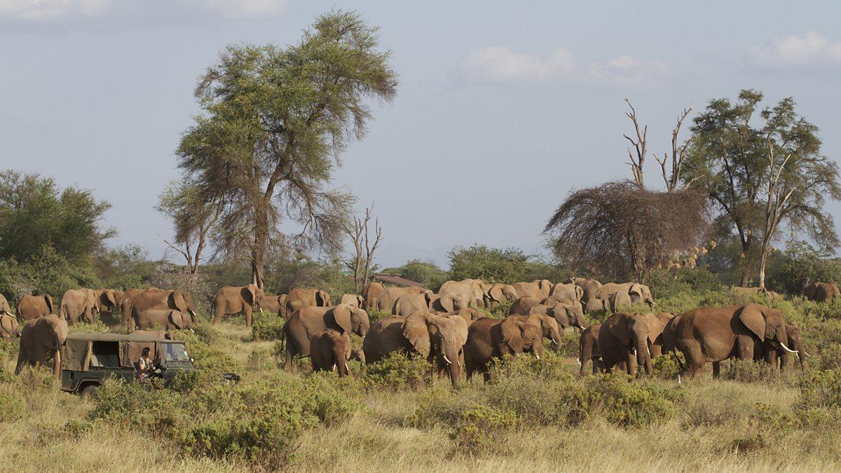 Bbc Two Saba Amongst The Elephants In Samburu National