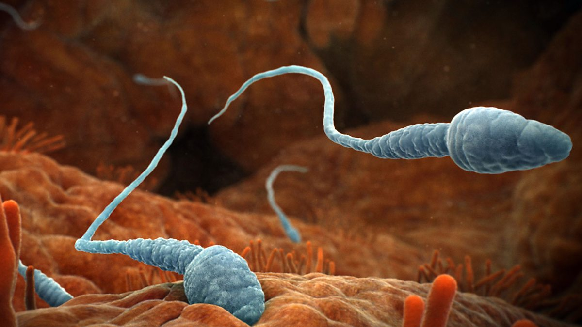 kak-zastavit-dvigatsya-nepodvizhnie-spermii