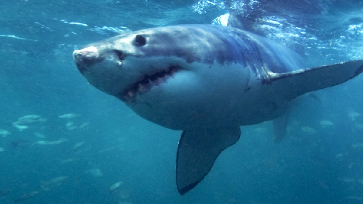 BBC World Service - Witness History, The Filming of Jaws