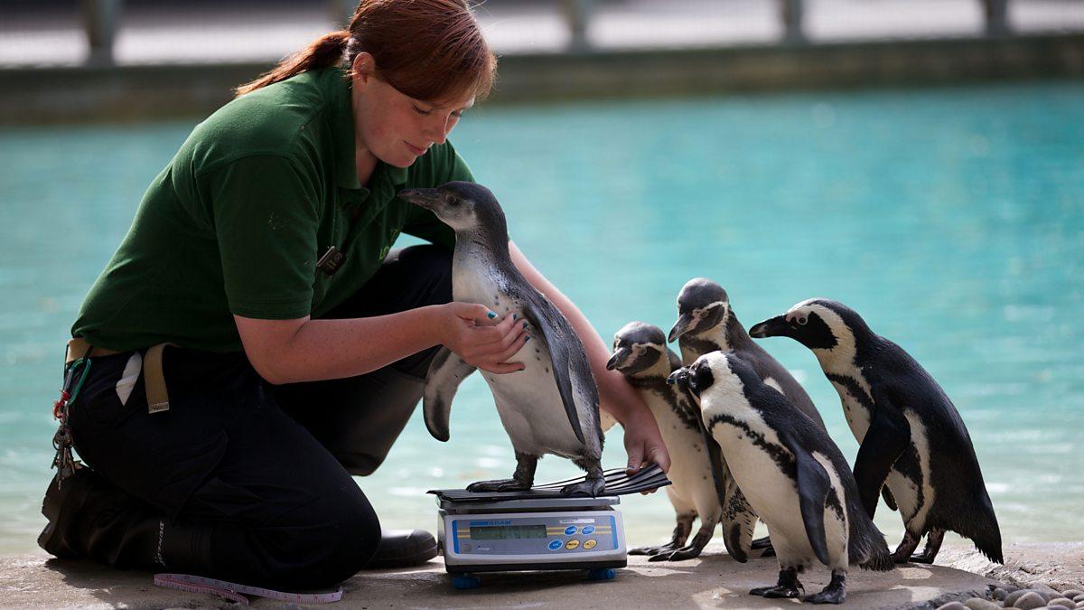 Научно-исследовательская работа в зоопарке