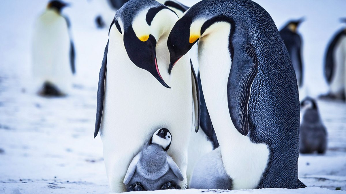 penguin single personals Spruce, a 1-year-old humboldt penguin, is looking for love on dating app plenty of fish the young bird didn't hit it off romantically with the 13 other.
