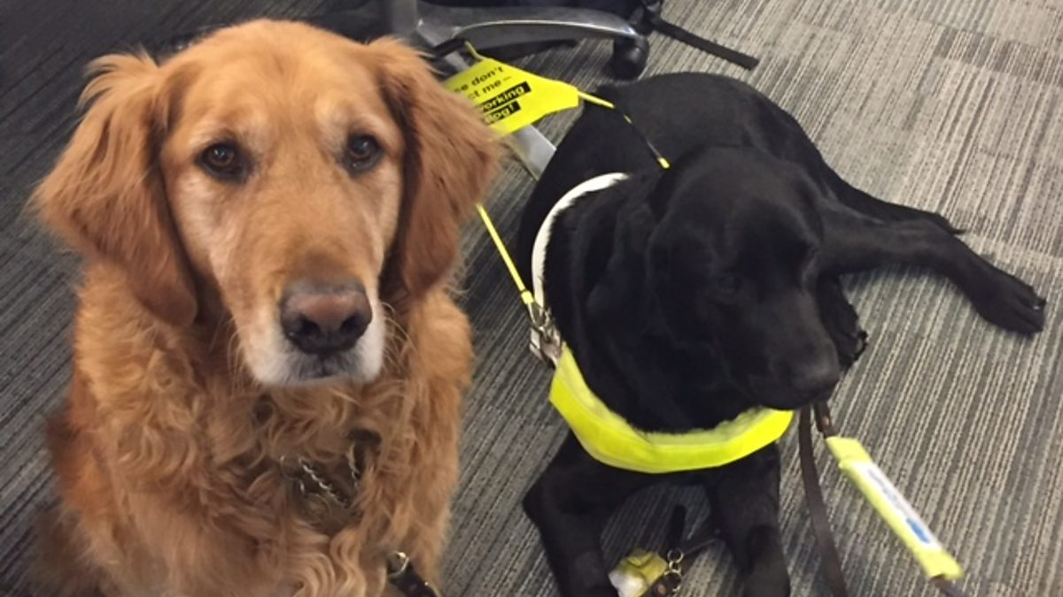 BBC Sounds - Ouch – the cabin fever podcast, Training to use a guide dog isn't always a walk in the park