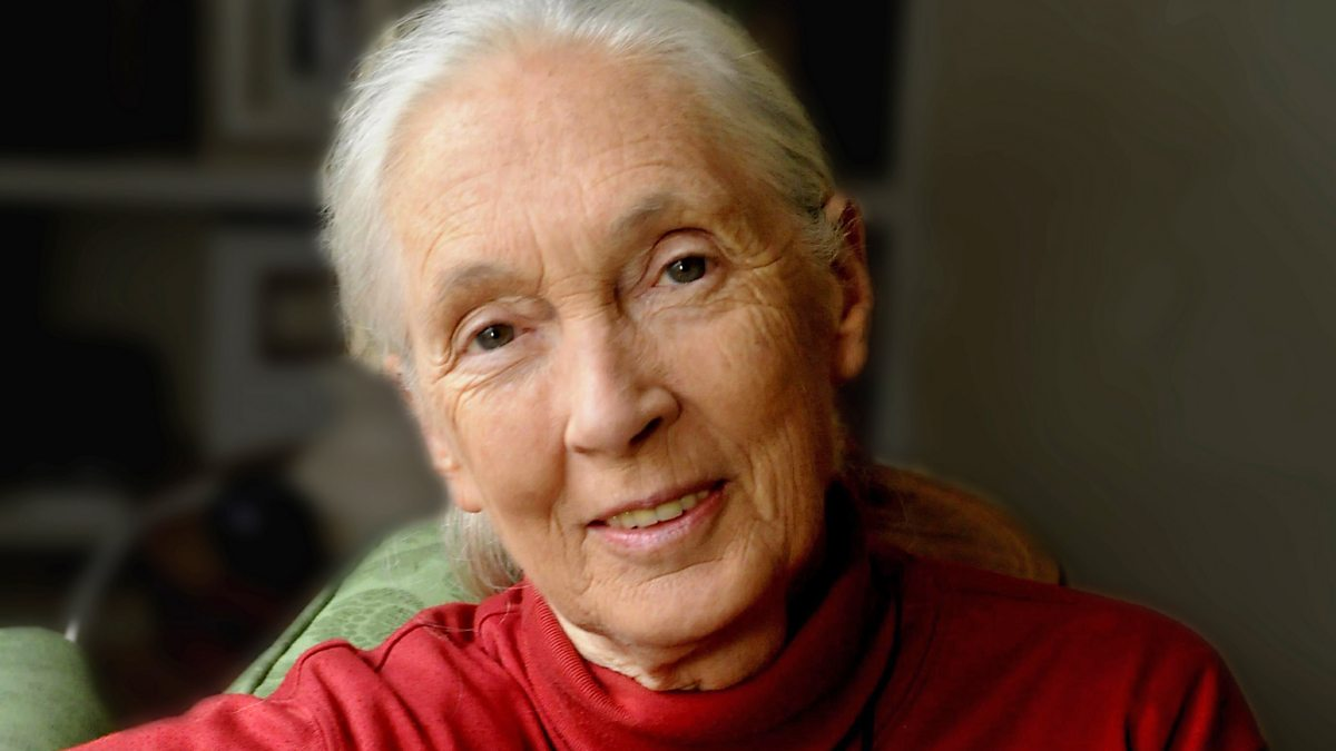 jane goodall Conservation icon jane goodall: stop destroying the planet or we may destroy ourselves the iconic scientist who studied chimps in africa says that without more protection of the environment, 'we may not even be on it anymore.