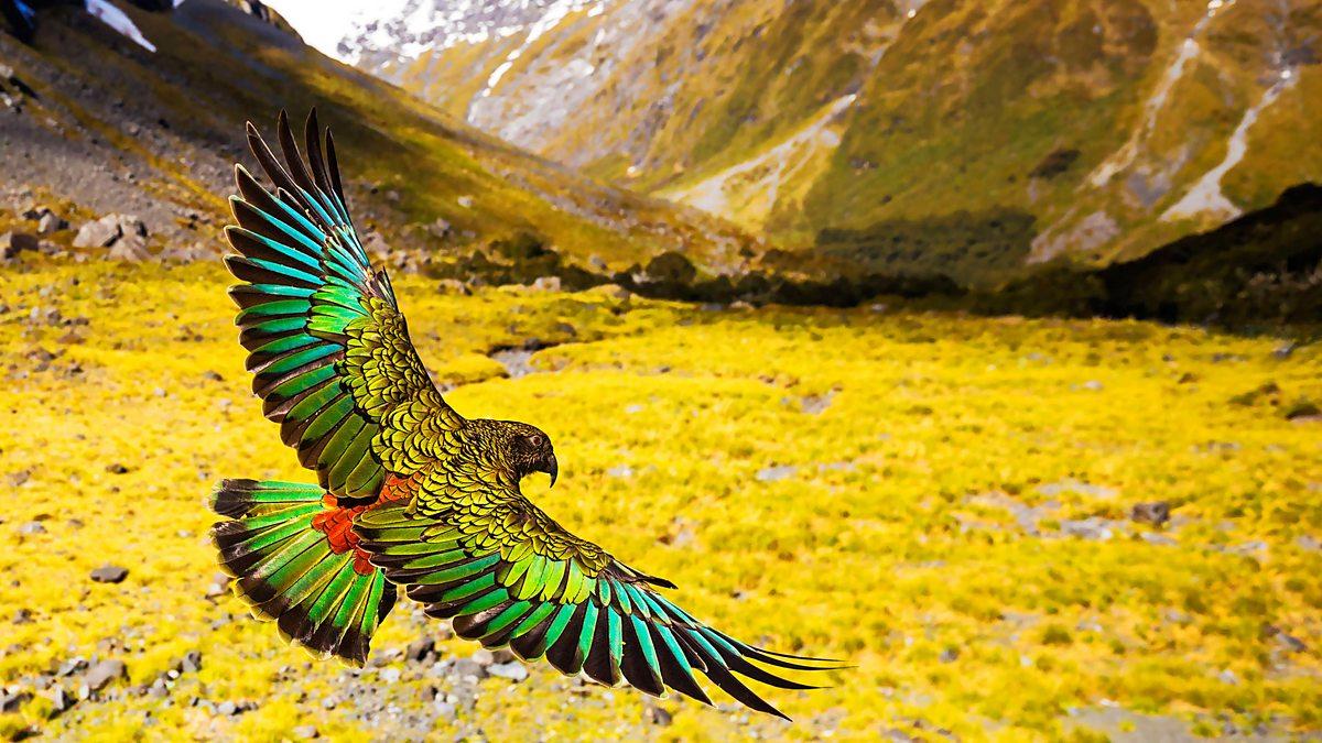New Zealand Mythical Islands