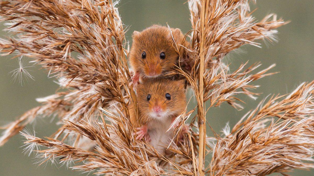 BBC - Harvest Twice - The Countryfile Calendar 2017