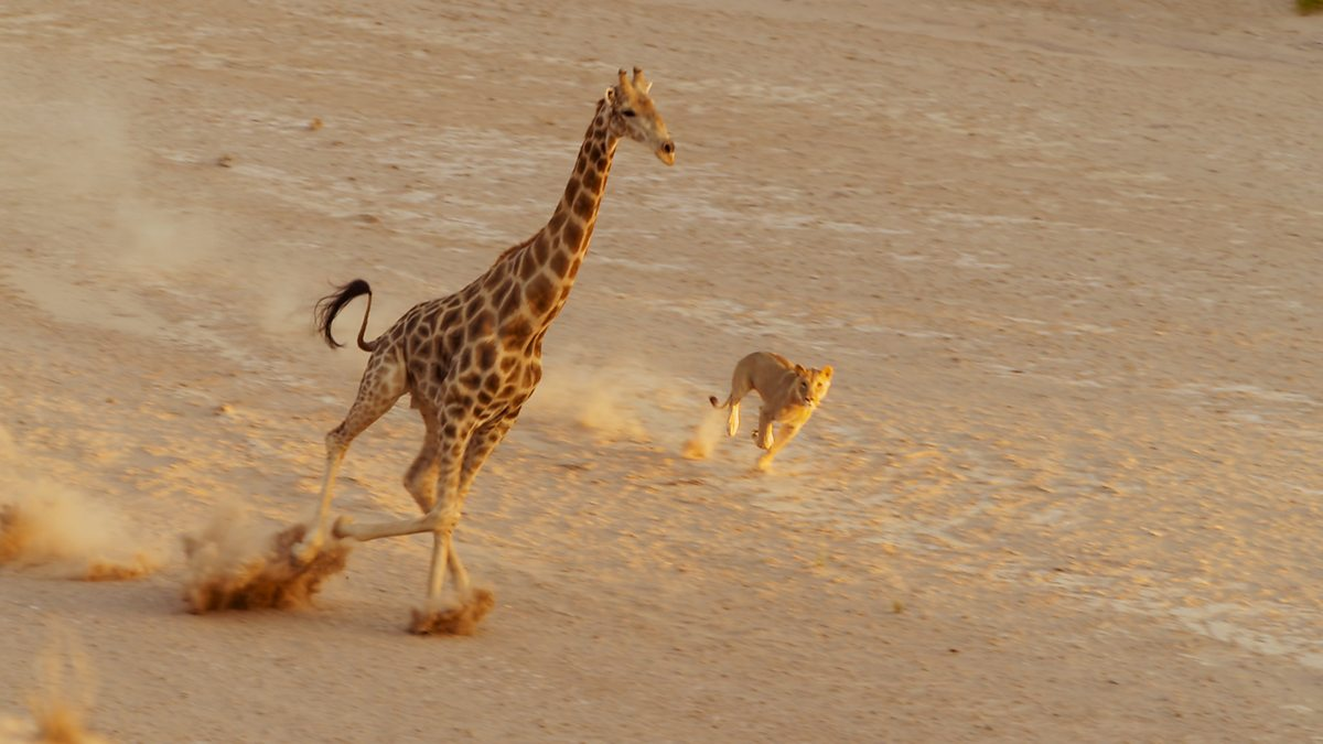 planet earth animals - photo #41